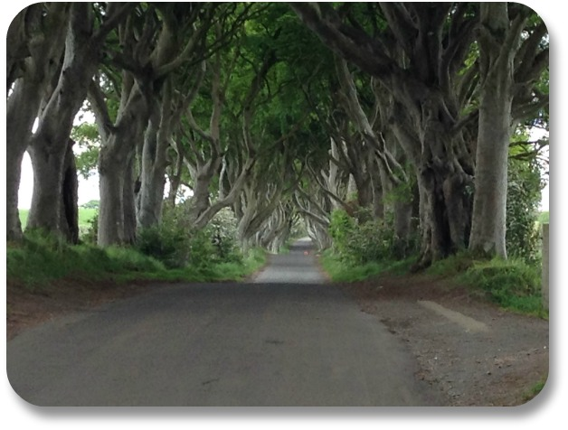 Picture of Ireland - Dark Hedges.